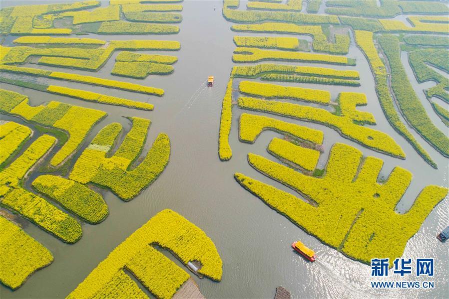 Tourists enjoy scenery of cole flowers in east China's Jiangsu