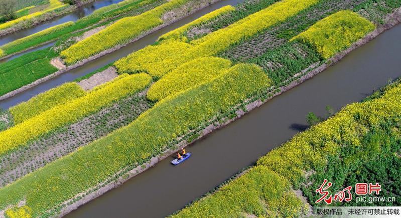 Beautiful spring scenery in Haian County