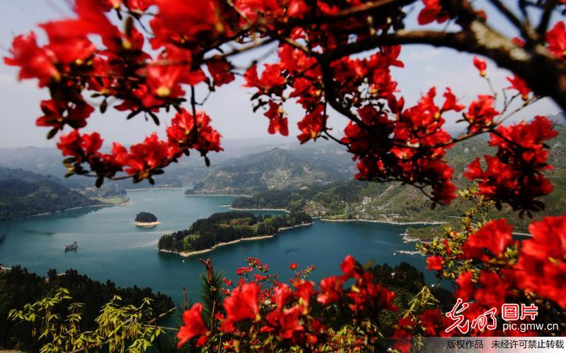 Spring scenery of flowers and lake in SW China's Chongqing