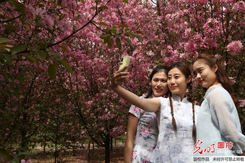 Tourists view crabapple flowers in E China