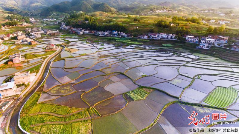 Beautiful scenery of rice fields in China's Hubei