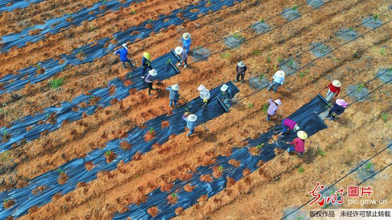 江西职业农民带薪种田
