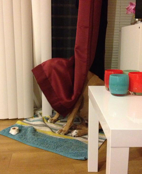 Those Pets Who Are So, So Terrible At Hide-And-Seek, But We Still Love Them