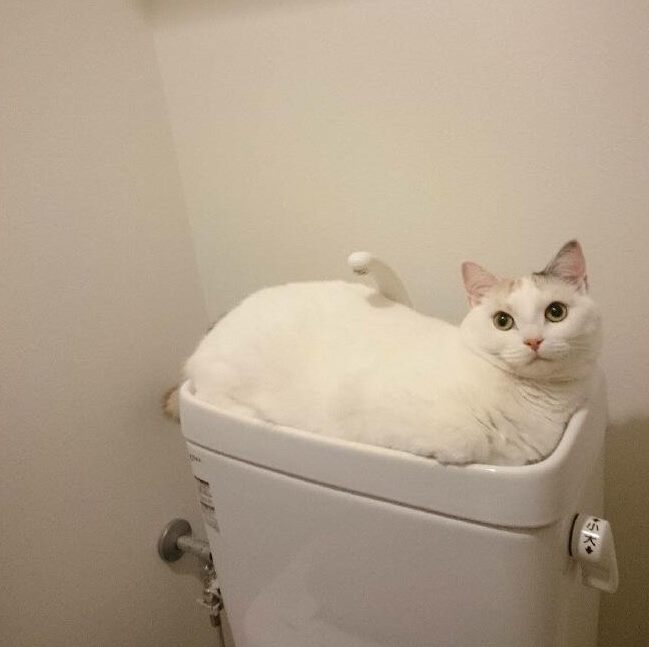 My cat always likes sleeping in some weird places...