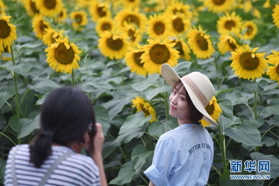 Tourists enjoy themselves amid sunflowers in Beijing