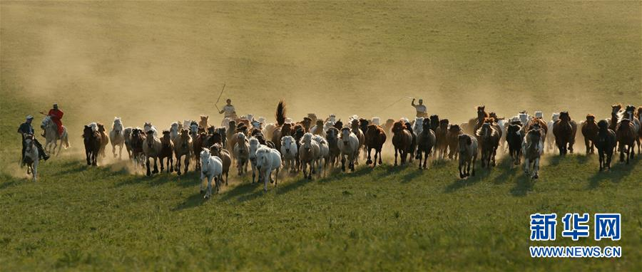 Herdsmen drive horses on grassland in Chifeng City