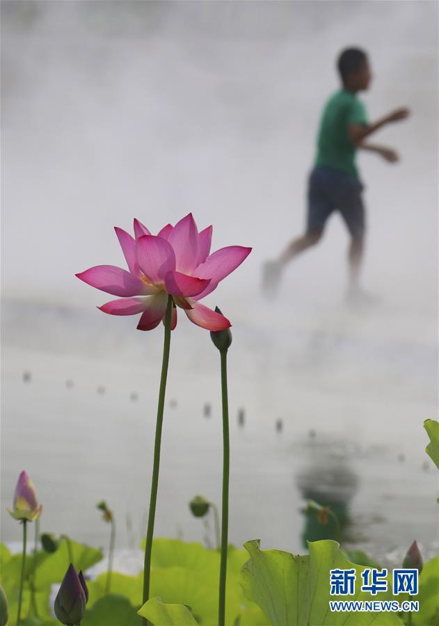 Lotus flowers at Wanghe Park in Beijing