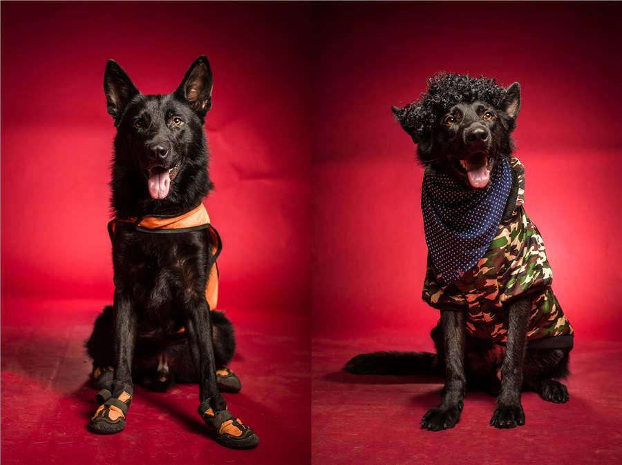 Rescue dog Bahai wears a uniform and a fashionable military-style vest. (Photo/Asianewsphoto)