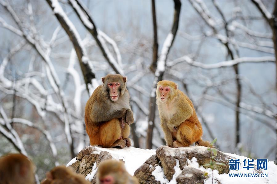 In pics: monkeys in snow