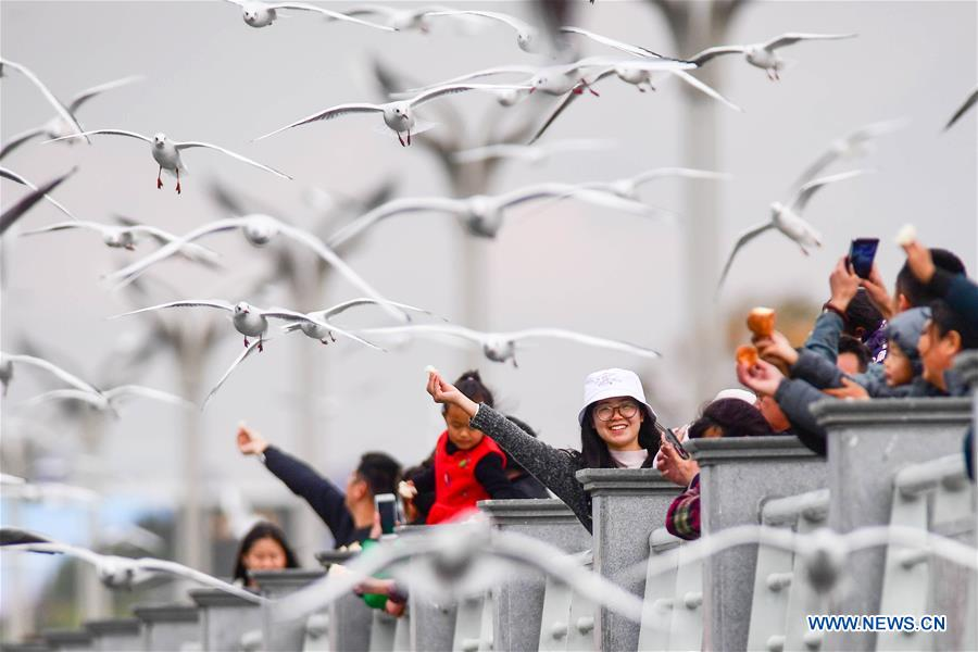 CHINA-YUNNAN-KUNMING-BLACK-HEADED GULL-NEW YEAR HOLIDAY (CN)