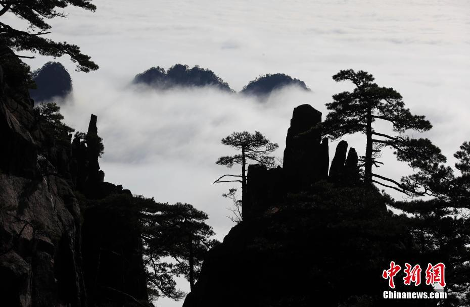 Picturesque scenery of sea of clouds after rain at Huangshan Mountain