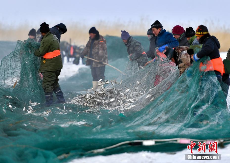 Fishermen busy harvesting fish in NW China's Xinjiang