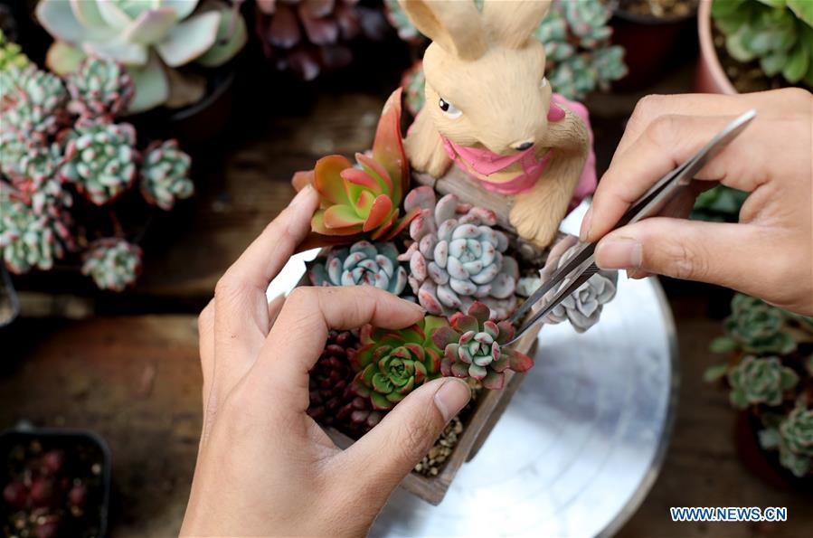 CHINA-HEBEI-SUCCULENT PLANTS (CN)