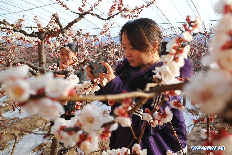 #CHINA-GREENHOUSE-SPRING (CN)