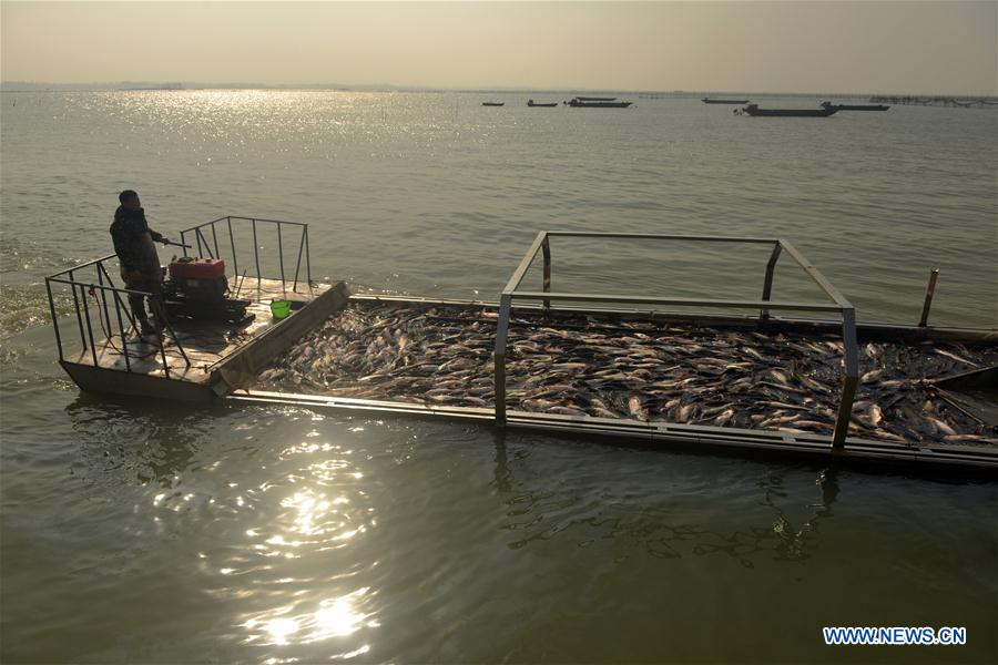 #CHINA-ANHUI-FISHING (CN)