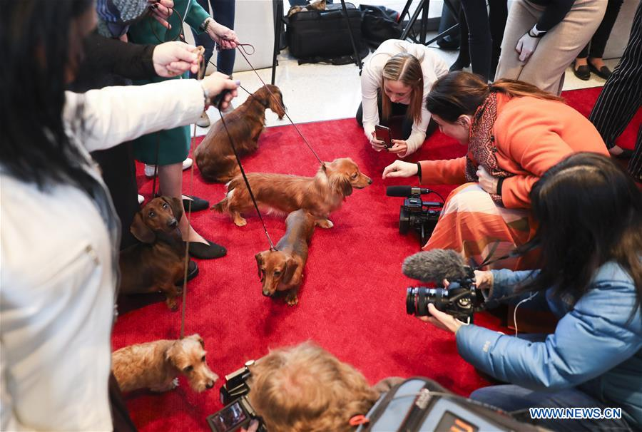 U.S.-NEW YORK-DOG SHOW-PRESS PREVIEW