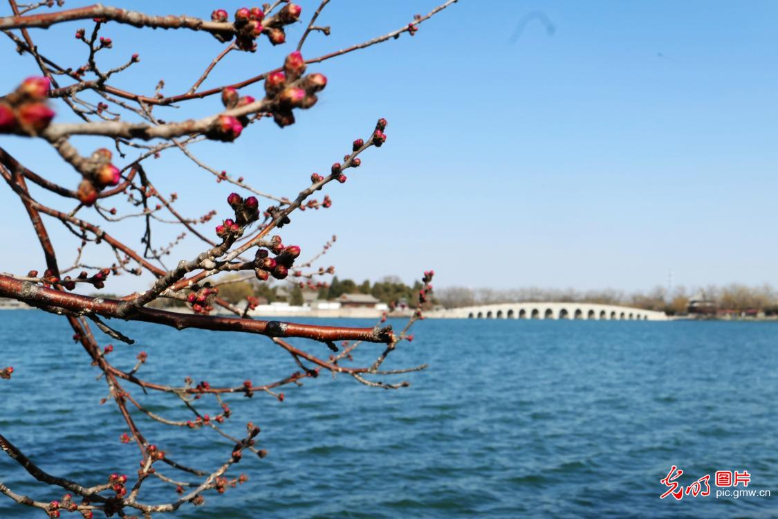 Spring scenery of Summer Palace