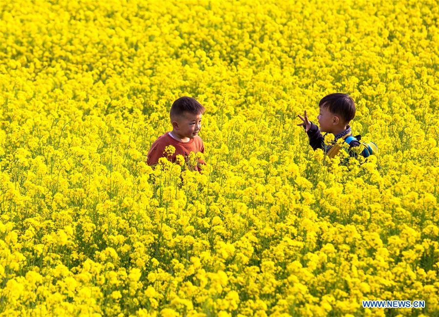CHINA-HEBEI-COLE FLOWER-SCENERY (CN)