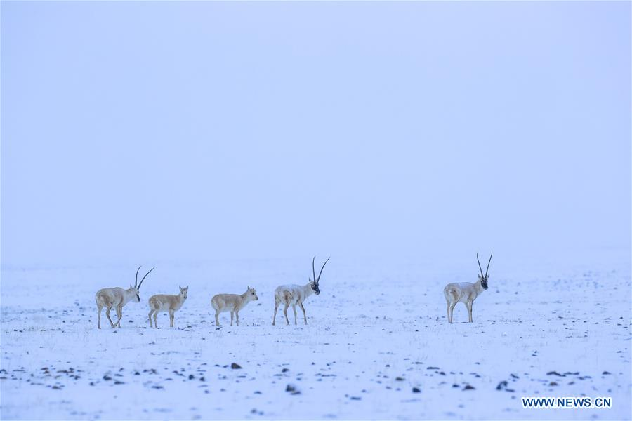 CHINA-XINJIANG-ALTUN MOUNTAINS-WILDLIFE-LANDSCAPE (CN)