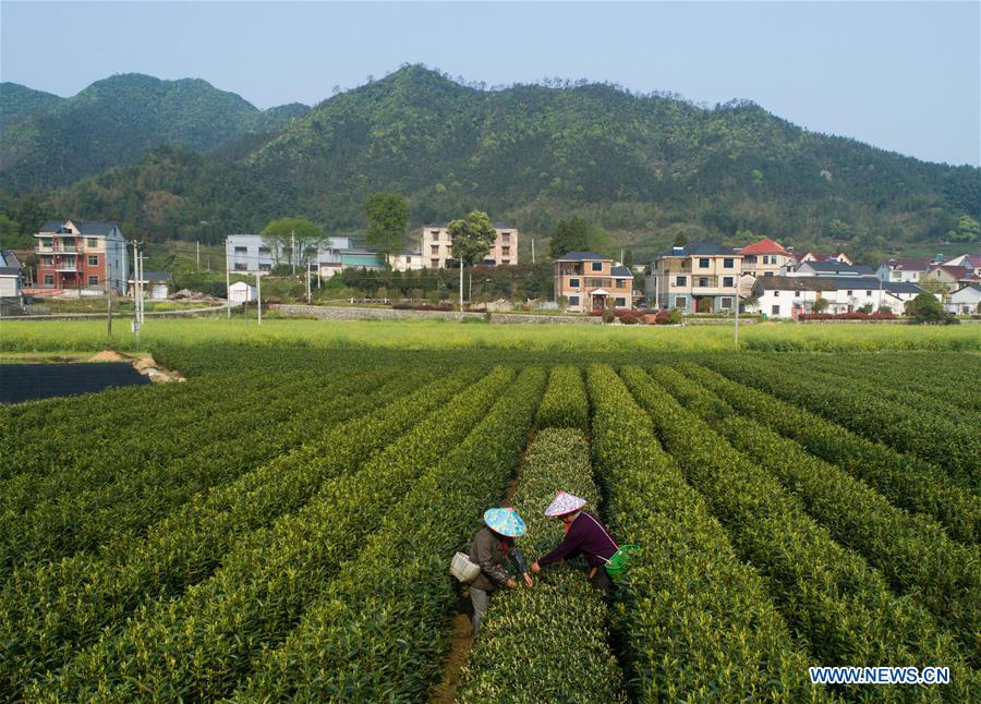 CHINA-ZHEJIANG-JIANDE-TEA (CN)