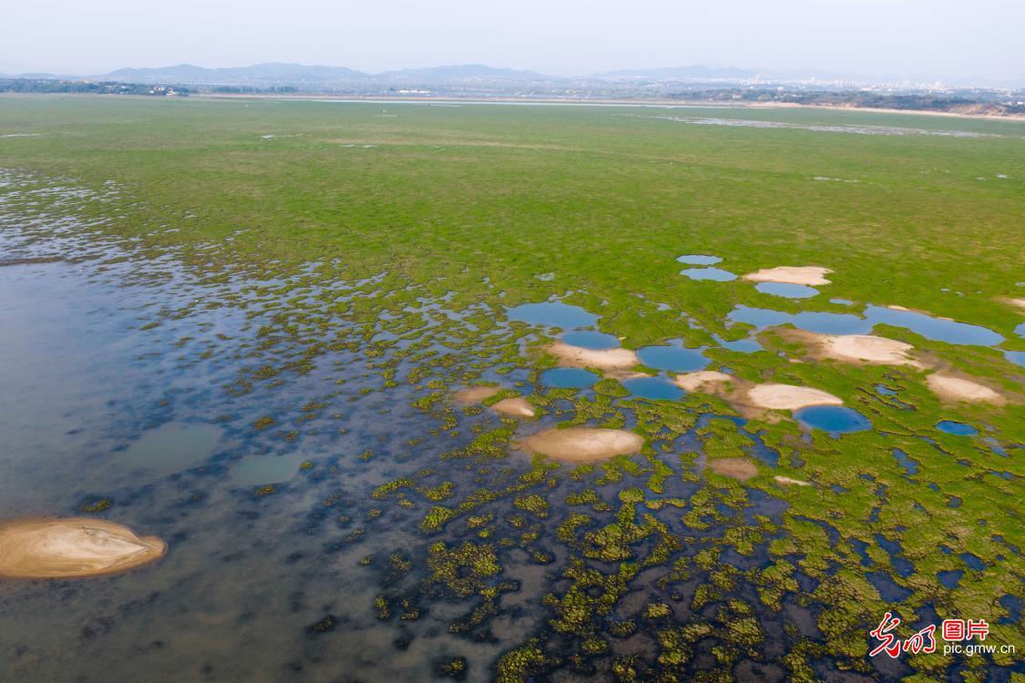 Spring scenery of Poyang Lake