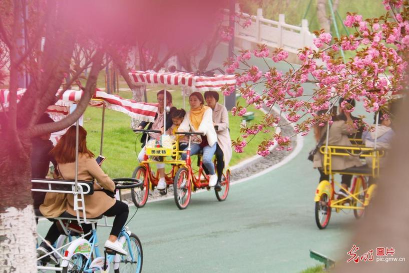 江苏盐城:赏花踏青享春色