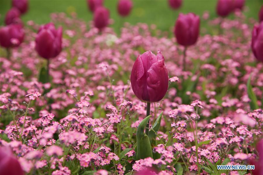 CROATIA-ZAGREB-SPRING-FLOWERS