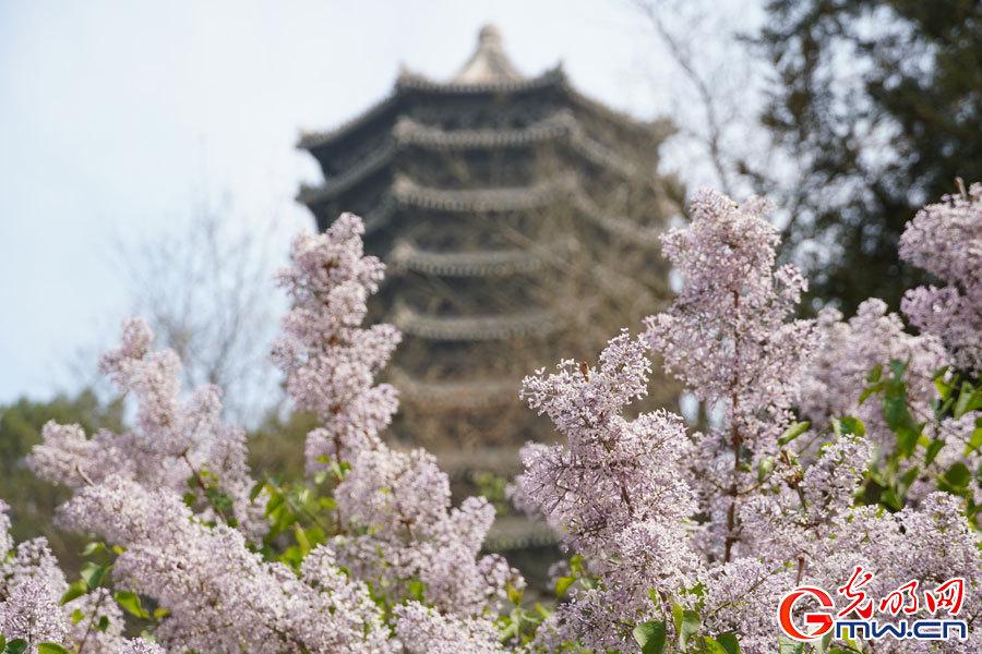 Spring scenery at Peking University in Beijing