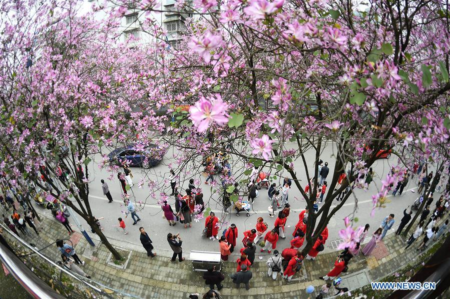 #CHINA-GUANGXI-LIUZHOU-FLOWERS (CN)