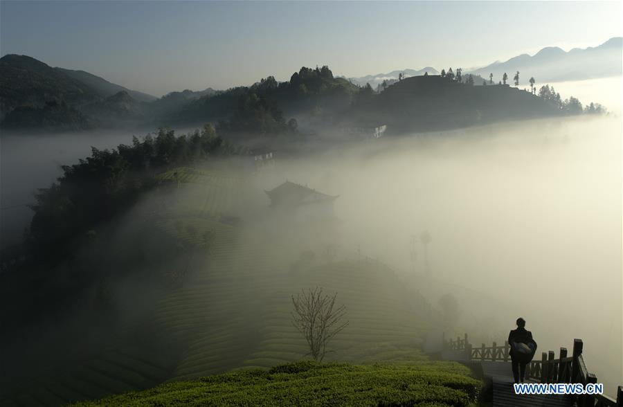 #CHINA-HUBEI-ENSHI-FOG-TEA PLANTATION(CN)
