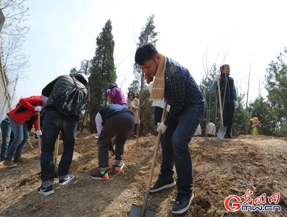 Foreign experts plant trees in Beijing