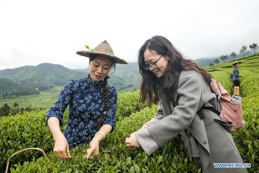 CHINA-FUJIAN-WUYISHAN-TEA GARDEN (CN)