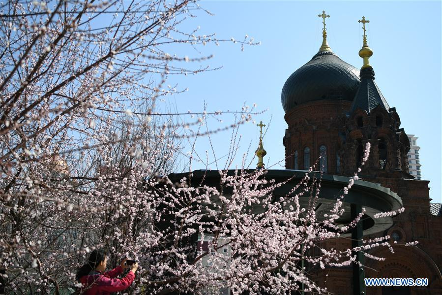 CHINA-HARBIN-SPRING (CN)