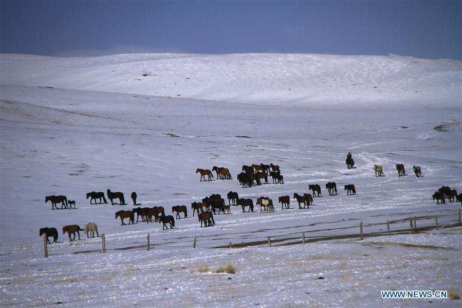 #CHINA-GANSU-HORSE RANCH (CN)