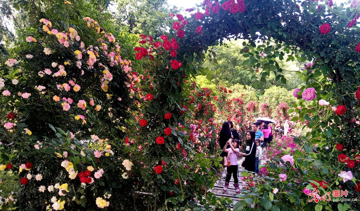 Peopleenjoy scenery of flowers in blossom in China's Wuhan