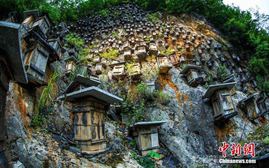 Cliff beehives seen at Shennongjia in C China's Hubei Province