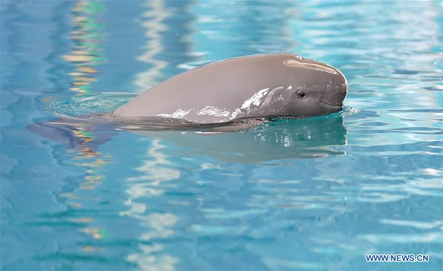 CHINA-WUHAN-FINLESS PORPOISES-BIRTHDAY (CN)