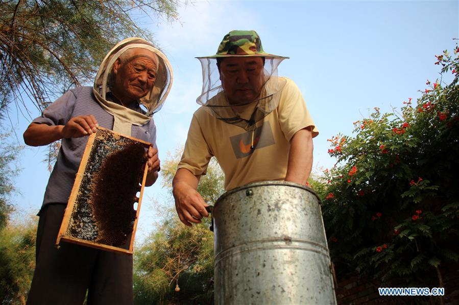 #CHINA-SHANDONG-BINZHOU-HONEY COLLECTION (CN)