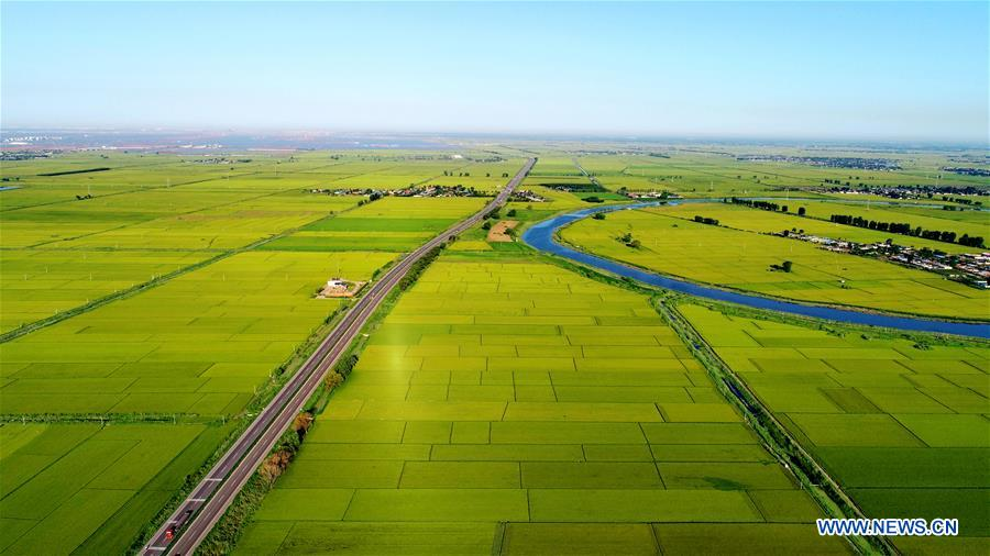 CHINA-HEBEI-PADDY FIELD-SCENERY (CN)