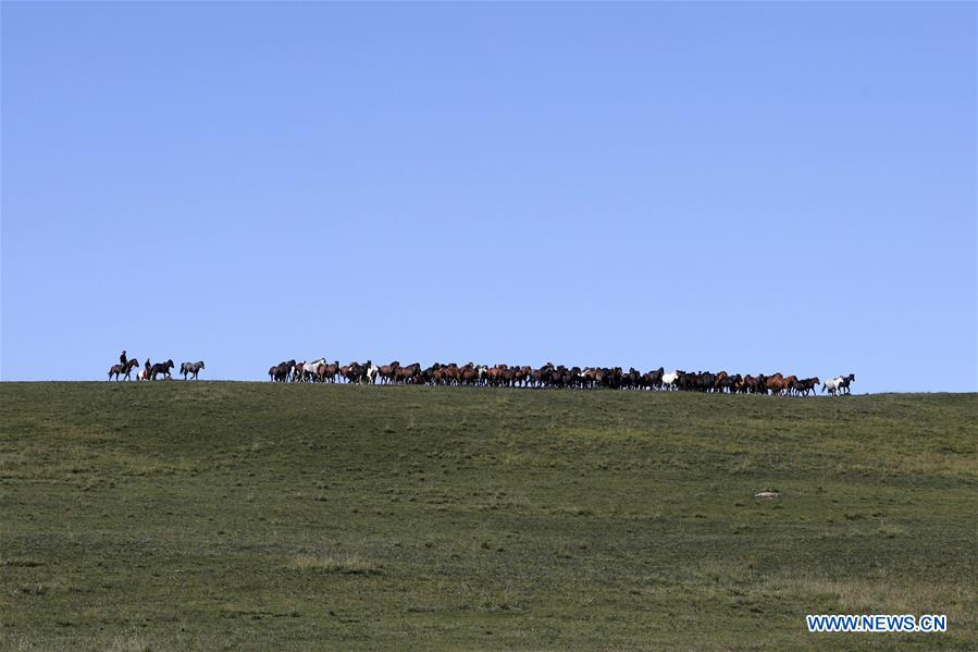 CHINA-GANSU-HORSE RANCH (CN)
