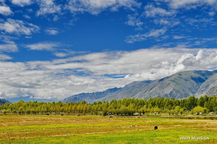 CHINA-LHASA-GOLDEN POND-SCENERY (CN)