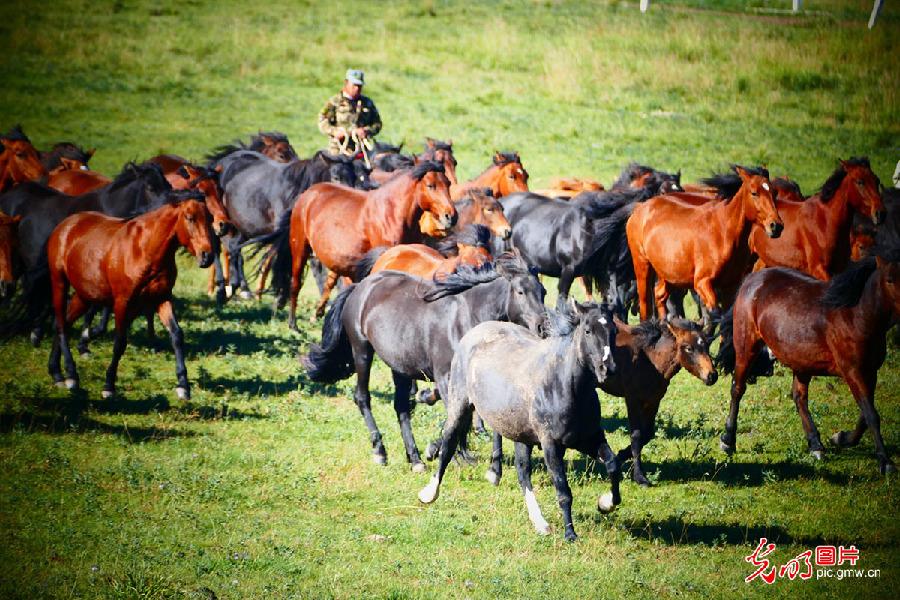 Scenery of Shandan Horse Ranch in NW China's Gansu