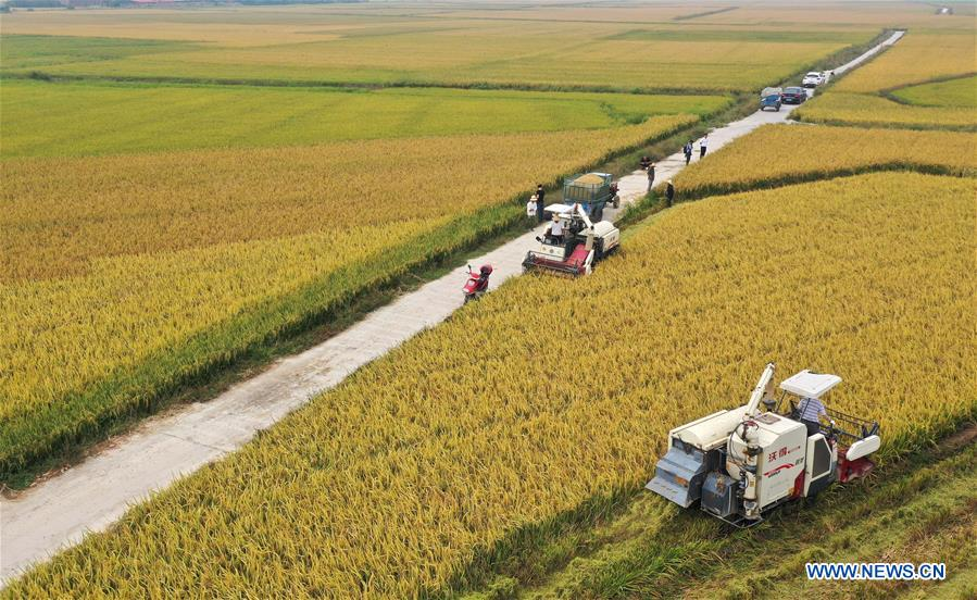 CHINA-JIANGXI-NANCHANG-HARVEST (CN)