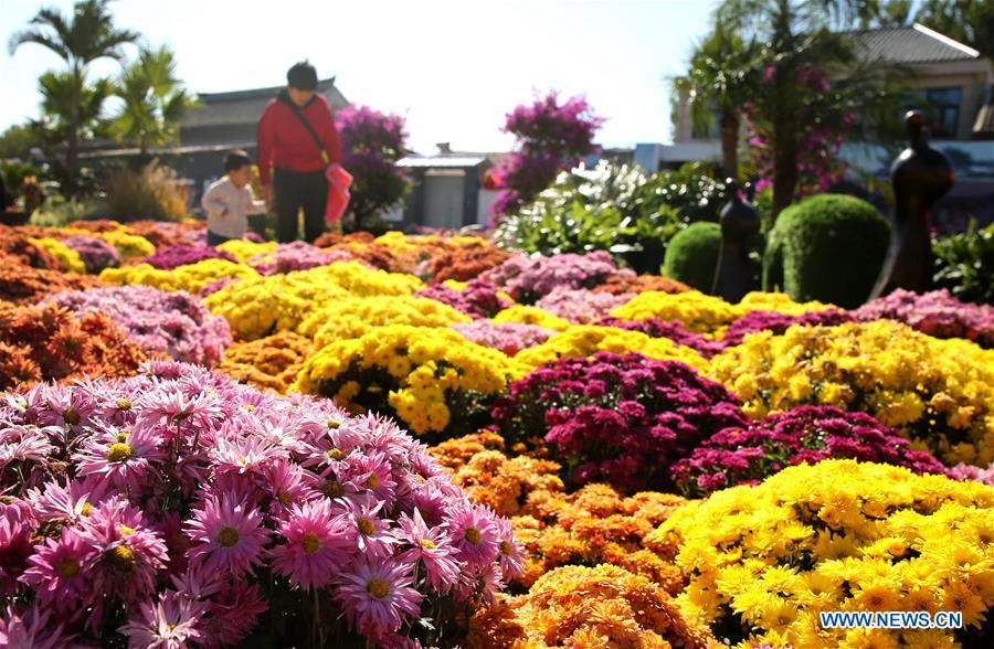 CHINA-HEBEI-CHRYSANTHEMUM EXHIBITION (CN)