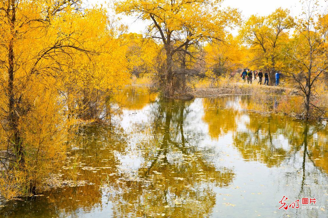 Autumn scenery of populus euphratica forest in NW China's Gansu
