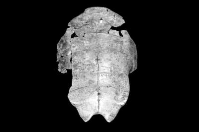 關于武丁以前甲骨文的探索