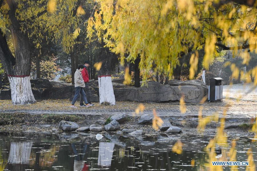 Autumn scenery in Hohhot, N China's Inner Mongolia
