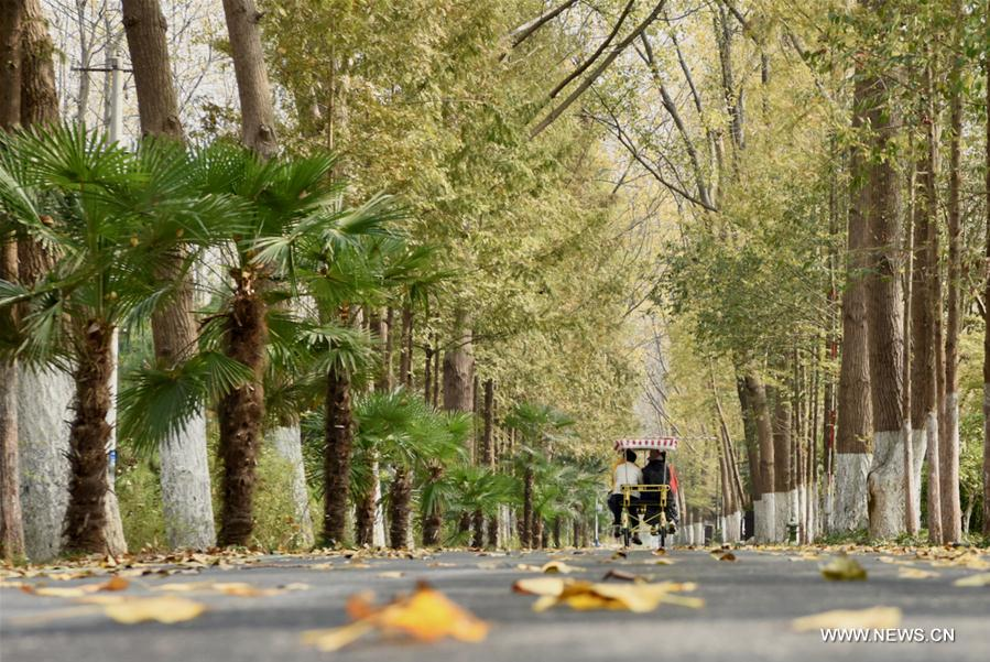 Citizens enjoy autumn scenery at Binhu national forest park in Hefei