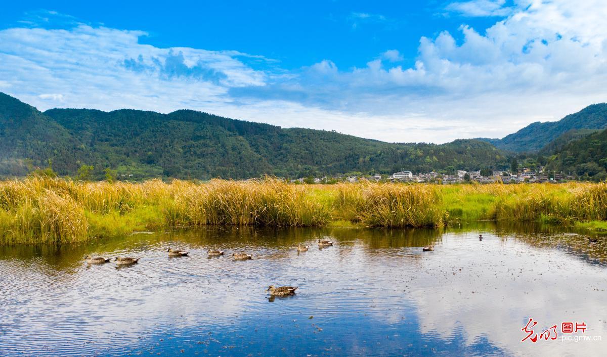 Beautiful wetland sceneryin Tengchong, SW China's Yunnan