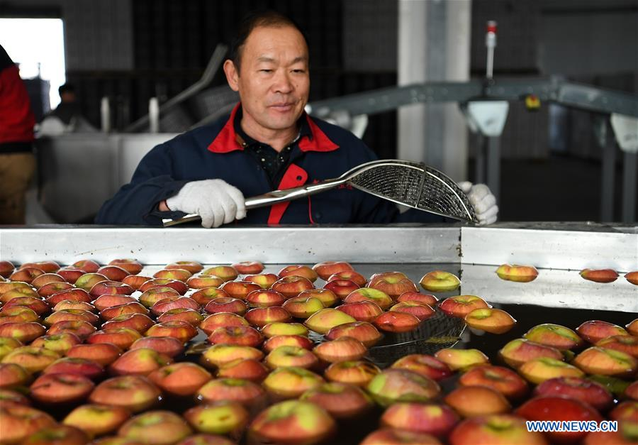 Aksu, major apple production area in China